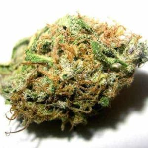 Maui Waui strain is greatly valued for its sweet, tropical taste.