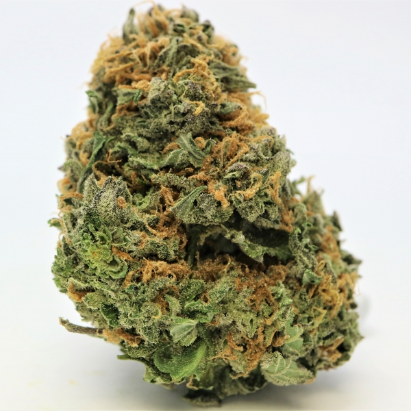 Blue Cheese Strain is very apparent in the body high, while the sativa portion keeps the strain lively. It is a good choice when treating anxiety, depression, or pain, but it also works well on migraines, PTSD, ADHD, and bipolar disorder.