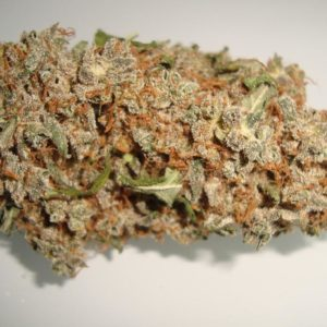 King Tut Weed - Canna 420 Store